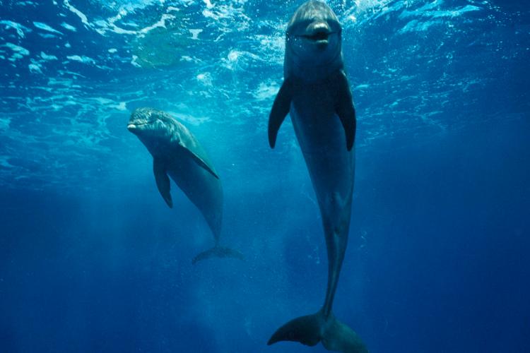 南通海底世界旅游