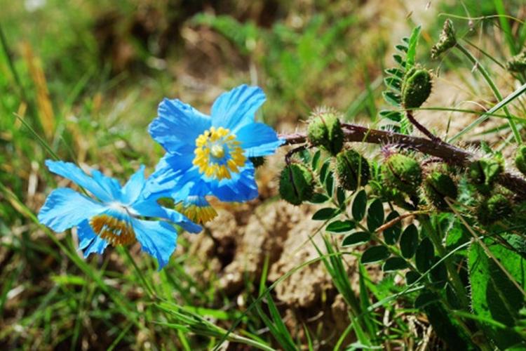 珍稀植物自然保护区旅游