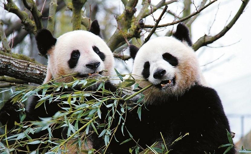太平洋海底世界 紫竹院公园 游船 动物园熊猫馆一日游