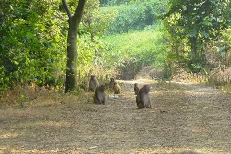 太行山猕猴自然保护区旅游