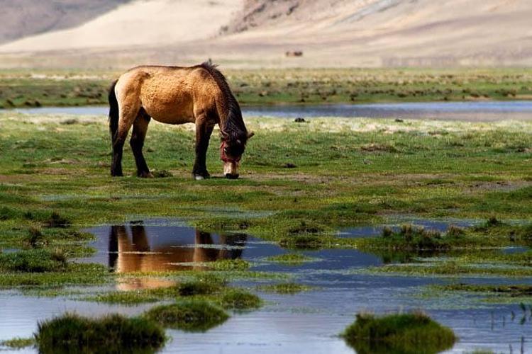 东久自然保护区旅游