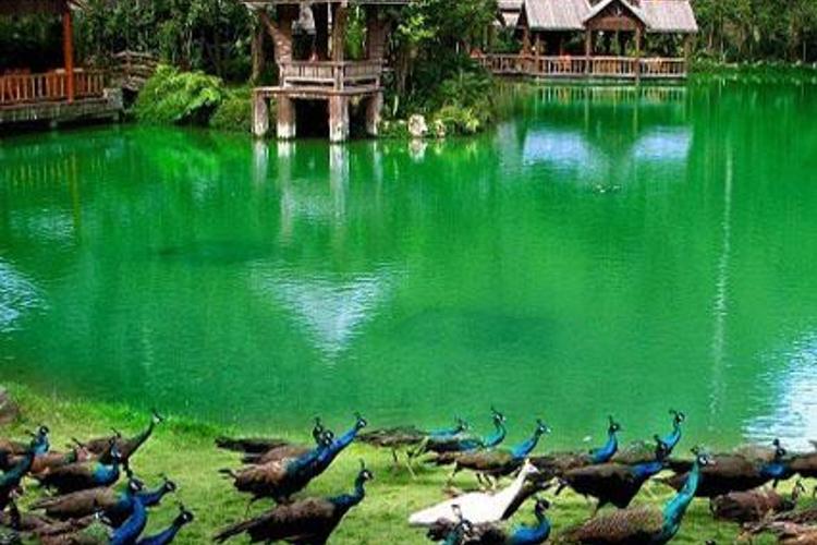 孔雀湖旅游