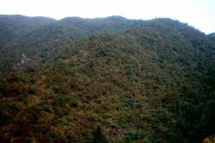 鳌峰山旅游