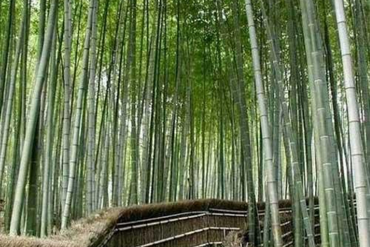 竹林沟旅游