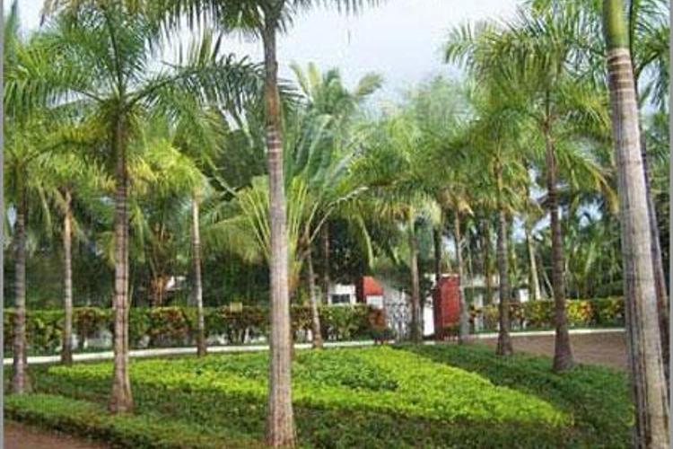 保亭热带植物园旅游