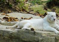 广州长隆野生动物园,欢乐世界,水上乐园,飞鸟乐园,珠海海洋王国任选4园区6