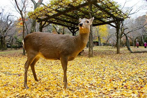 雪豹,金雕,獐子,猞猁,水獭等11种珍稀野生动物