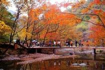 丹东到关门山赏枫一日游,赏枫叶最美的地方,丹东看枫叶旅游团