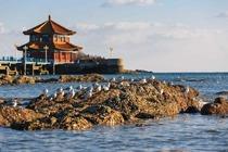 青岛市内、烟台、威海、蓬莱高卧5日跟团游栈桥、小青岛、五四广场、八仙渡海风景区、定远号铁甲舰