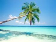 三亚纯净海洋  夏威夷草裙狂欢+天涯海角 三亚精华景点双飞5日游