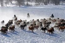 乌兰布统3日北国风光,塞外雪乡,冬日里的皇家牧场乌兰布统3日活动