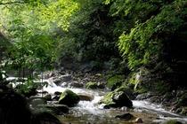 本溪绿石谷森林公园1日巴士游本溪绿石谷森林公园
