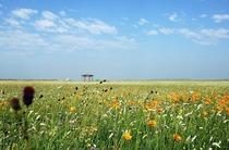 北京出发 游览神秘而美丽的木兰围场.乌兰布统大草原双汽二日游