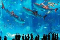 〖岛城1票通门票全包〗青岛海底世界+小青岛+海上观光+葡萄博物馆1日大巴游