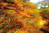 妇女节立减50/人岳西明堂山、高空玻璃栈道一日游丨O购物+门票全含
