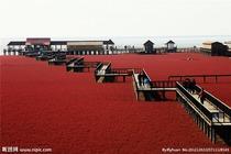 大自然神笔; 红海滩 4A级景区廊道1日游 赠送电瓶车zq