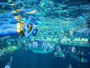 东莞至香港真纯玩两日游 全天海洋公园 市区观光 维多利亚港 太平山 浅水湾