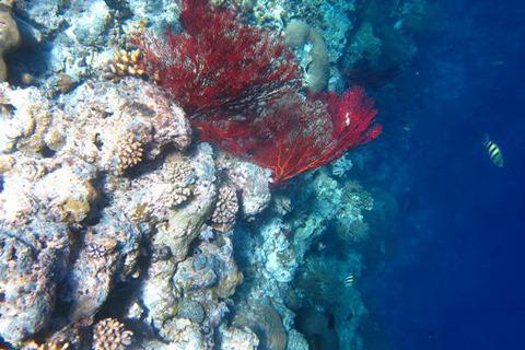 壁纸 海底 海底世界 海洋馆 水族馆 桌面 480_320