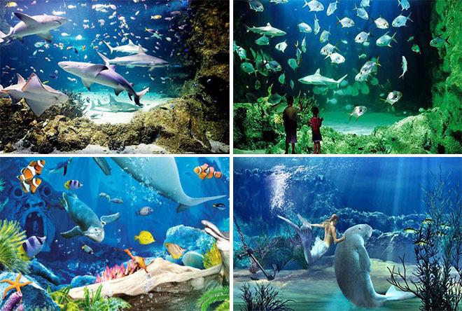 壁纸 海底 海底世界 海洋馆 水族馆 660_444