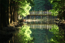李中水上森林公园+泰州老街+夜游凤城河+溱湖湿地大巴二日q