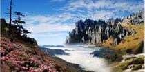 <中国国旅>恩施+神农架全景+西陵峡7晚8日跟团游(双卧 0购物 )