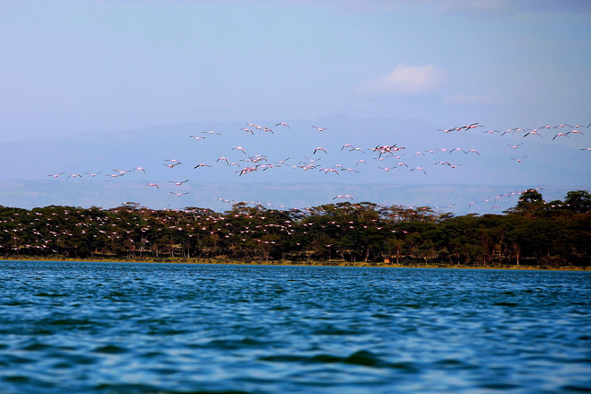 正是得天独厚的位置,纳瓦沙湖美丽富饶,湖中着落一些美丽的小岛,湖边