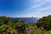 大连3日自由行(4钻)·优选四钻酒店 吃海鲜赏海景 探寻欢快海洋世界!