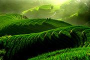 自然风(含单索+换山车)桂林往返龙脊梯田金坑大寨纯玩1日游、参观长发村