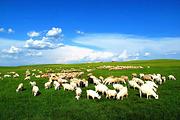 边境风情🔥呼伦贝尔大草原4日丨黄金牧场+呼伦湖+满洲里丨住蒙古包+草原骑马