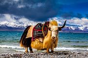 阿里转山15日 西藏阿里大北线环线冈15日经典仁波齐.转山祈福净心之旅