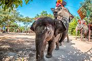 清迈美旺大象营半日游(骑大象+喂大象+给大象洗澡)赠电子照片套餐A