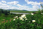 100%无强消呼伦贝尔莫日格勒+额尔古纳湿地+油菜花观赏+冰泉小镇1日游