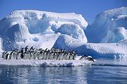 <5星庞洛邮轮星辉号>年初三包船南极+阿根廷+秘鲁+玻利维亚+厄瓜多尔31天