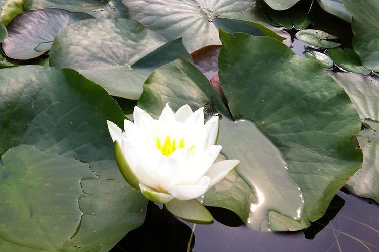 黑龙江省森林植物园旅游