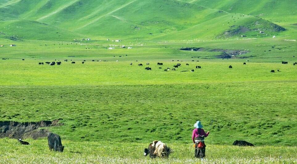 兰州-甘南-扎尕那迭部-尕海-郎木寺-碌曲-青海湖-茶卡-塔尔寺旅游包车