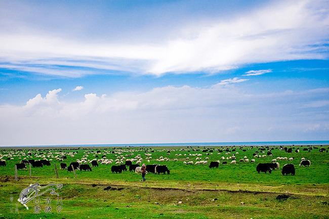 吐鲁番-布尔津-喀纳斯-禾木-魔鬼城-奎屯-塞里木湖-伊犁-那拉提旅游包车