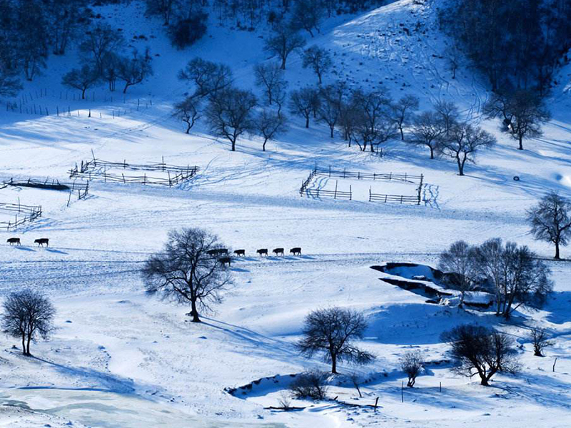 【自驾乌兰布统冬】穿越塞罕坝·月亮湖·塞北雪乡·小河头日出·将军泡子冰雪狂欢