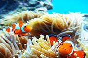 【最会游】长滩岛体验潜水 畅游水下世界(中文教练大船+免费高清照片视频)