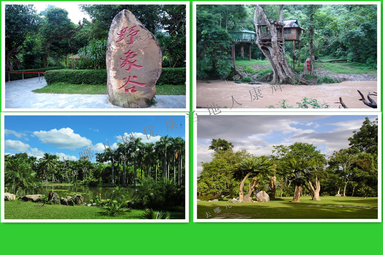 西双版纳野象谷、原始森林公园、花卉园4天游