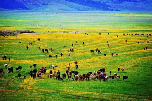 去哪儿优选【畅游大西北】新疆全疆纯玩无购物、超然远引带您漫步大西北 新疆深度游
