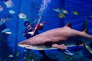 墨尔本水族馆儿童票