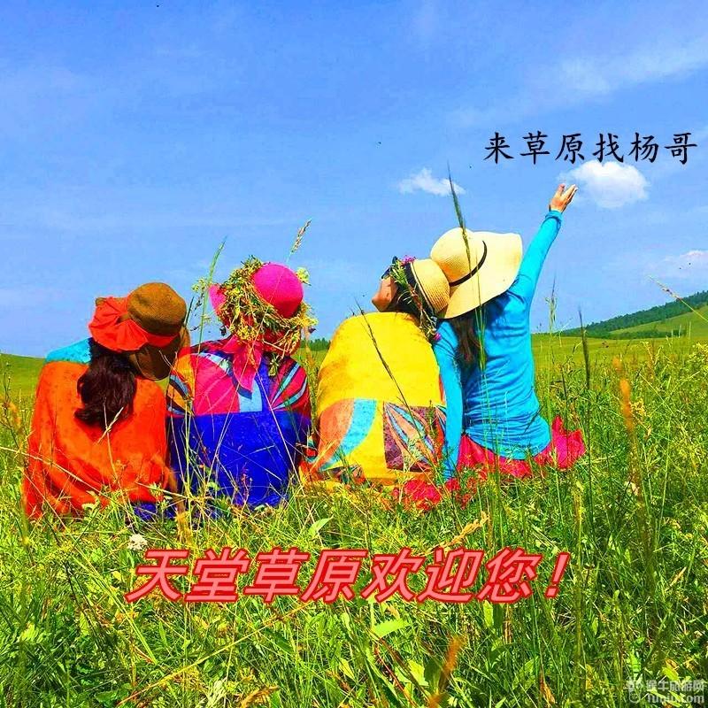 杨哥专属为您制定草原梦幻之旅【6天包车游】