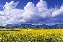 北京到青海湖