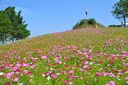 武汉周边游|格桑花开!木兰草原休闲、歌舞狂欢一日游