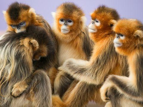 自选荣成名人酒店1晚,游威海西霞口神雕山野生动物园,享猴子山、松鼠园、猛禽园等美景,套餐含双早,免费停车