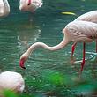 【单订房2天1晚】广州长隆香江酒店+动物世界两日票2张