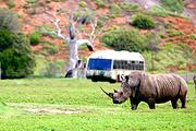 墨尔本华勒比野生动物园一日游(自驾推荐)非洲风情+玫瑰园和华勒比庄园
