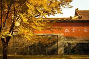 金秋赏红枫丨深度游、品质保障丨一车一导丨天安门升旗丨北京故宫+长城3日