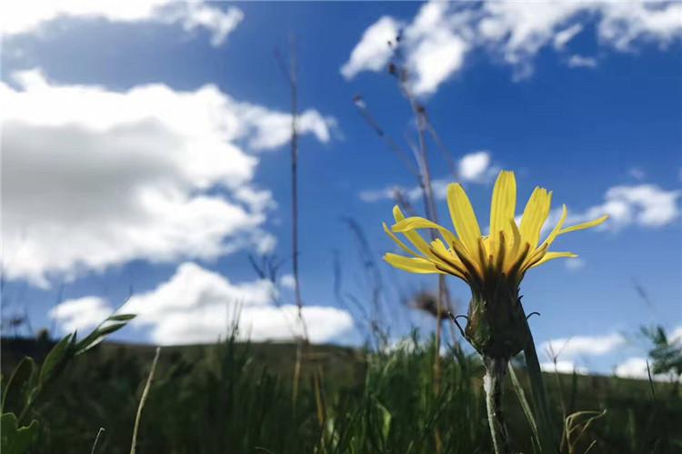 暑期特惠 小包团 纯玩0购物 室韦名镇  根河湿地 呼伦贝尔草原3日自由行