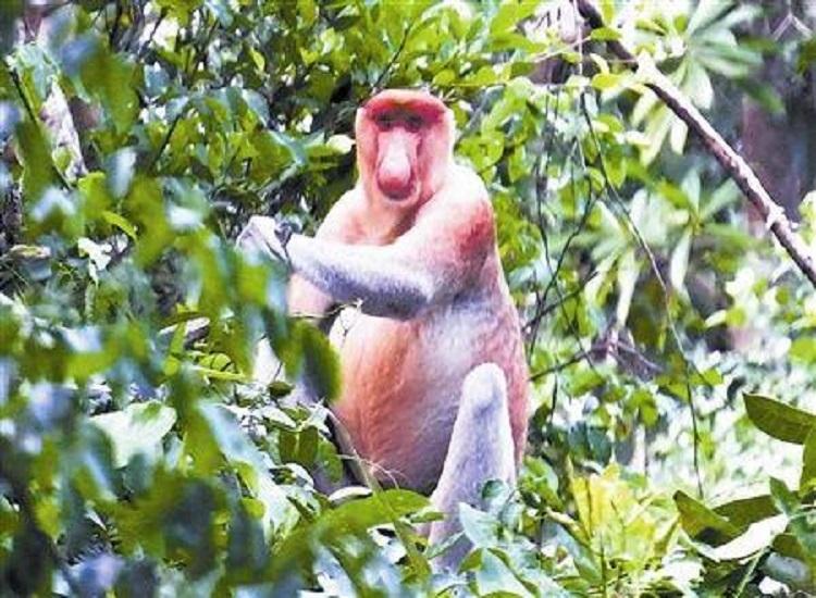马来西亚沙巴kawa红树林萤火虫一日游